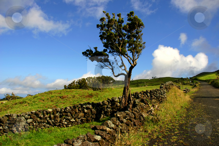 Azores stock photo, Azores typical view at the island of Sao Miguel by Rui Vale de Sousa