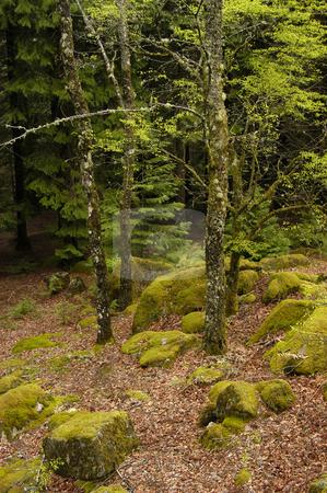Forest stock photo, Portuguese national park forest by Rui Vale de Sousa