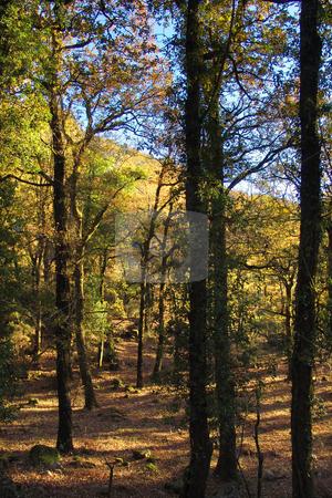 Forest stock photo, Forest details by Rui Vale de Sousa