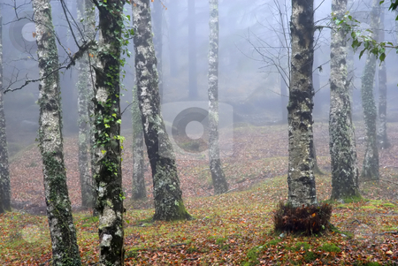 Autumn stock photo, Autumn forest detail in a foggy day by Rui Vale de Sousa