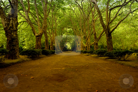 Azores stock photo, Path with trees in azores, s miguel island by Rui Vale de Sousa