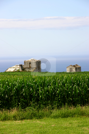 Farm stock photo, Azores green fields at sao miguel island by Rui Vale de Sousa