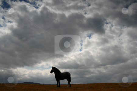 Horse stock photo, Young horse at the farm with the sky as background by Rui Vale de Sousa