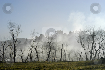 Fog stock photo, Fog trees in autumn in the north of portugal by Rui Vale de Sousa
