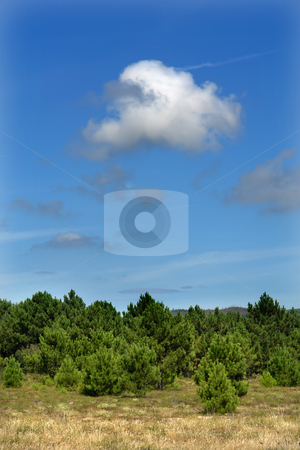 Trees stock photo, Trees in the landscape, north of spain by Rui Vale de Sousa