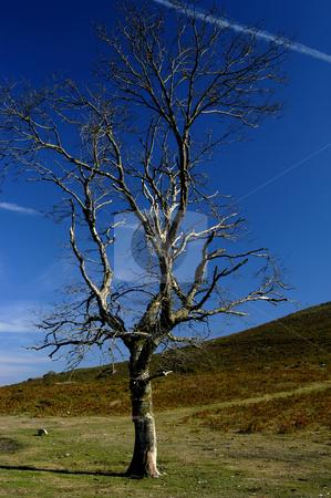 Tree stock photo, Tree on the mountain by Rui Vale de Sousa
