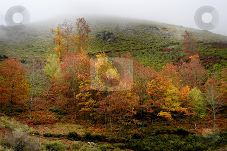 Autumn stock photo, Autumn in the north of portugal by Rui Vale de Sousa