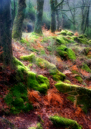 Forest stock photo, Forest details by Rui Vale de Sousa
