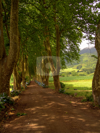 Road stock photo, Path with tree on two side in azores by Rui Vale de Sousa