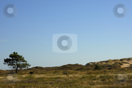 Tree stock photo, Tree in the landspace, north of spain by Rui Vale de Sousa