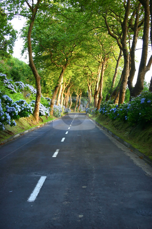 Road stock photo, Road in the forest by Rui Vale de Sousa