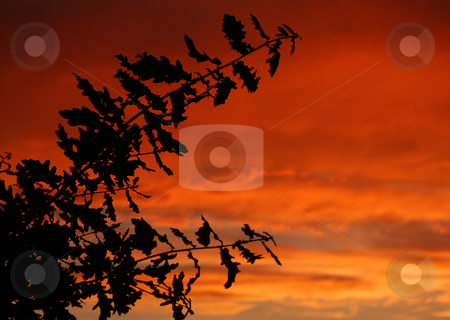 Branches stock photo, Branches at sunset by Rui Vale de Sousa