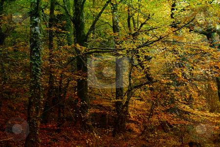 Forest stock photo, Autumn at the forest, portuguese national park by Rui Vale de Sousa
