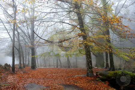 Mist stock photo, Forest fog in the portuguese national park by Rui Vale de Sousa