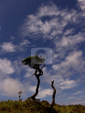 Trees stock photo, Ancient trees at the lake in Pico island, azores by Rui Vale de Sousa