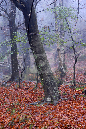 Forest stock photo, Forest smog in the portuguese national park by Rui Vale de Sousa