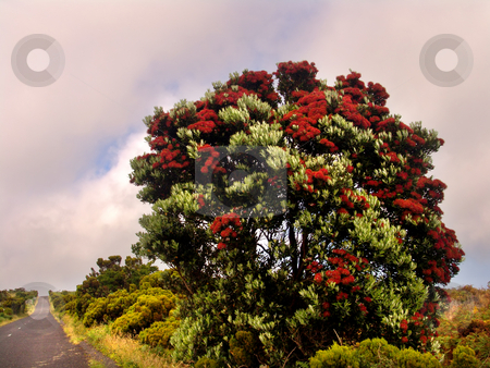 Flowers stock photo, Flower tree on the road by Rui Vale de Sousa