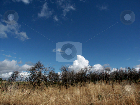 Fields stock photo, Fields vegetation by Rui Vale de Sousa