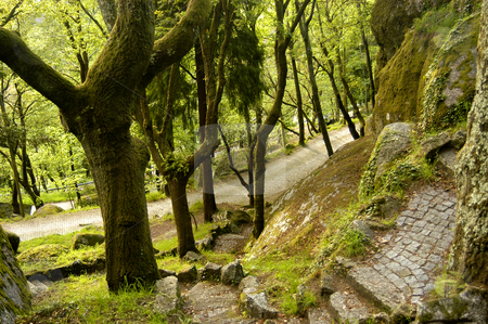 Trees stock photo, Portuguese national park detail by Rui Vale de Sousa
