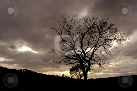 Tree stock photo, Tree at the sunset by Rui Vale de Sousa