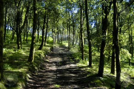 Road stock photo, Path in the forest by Rui Vale de Sousa
