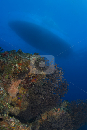 Coral Head and Hull stock photo, A coral head in the foreground in beautiful blue ocean water, with the hull of the boat visible above the surface of the water. by A Cotton Photo