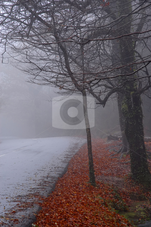 Smog stock photo, Forest road in a dark foggy day by Rui Vale de Sousa