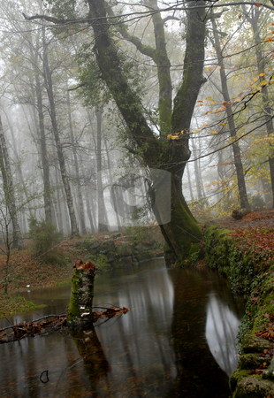 Forest stock photo, Small river in the portuguese national park by Rui Vale de Sousa
