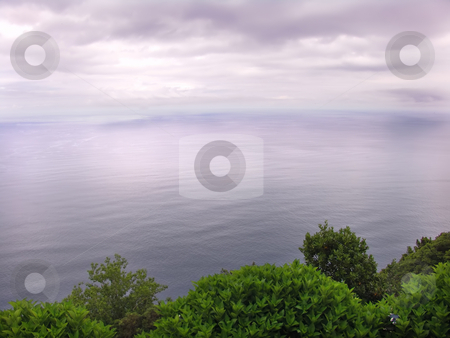 Oceans stock photo, Vegetation at the sea by Rui Vale de Sousa
