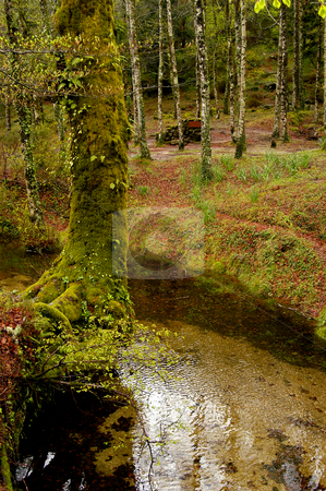 Woods stock photo, Small river in the portuguese national park by Rui Vale de Sousa