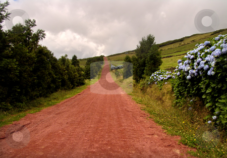 Road stock photo, Red road in azores by Rui Vale de Sousa