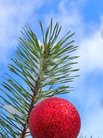 Christmas tree against blue sky stock photo, Red decoration ball on the christmas tree outdoor by Sergej Razvodovskij