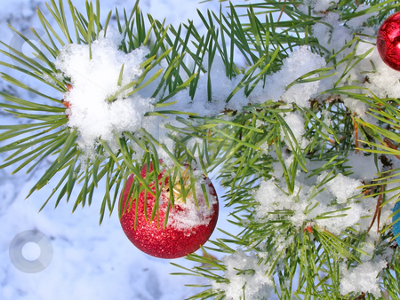 Christmas tree under snow stock photo, Red decoration ball on the christmas tree outdoor by Sergej Razvodovskij