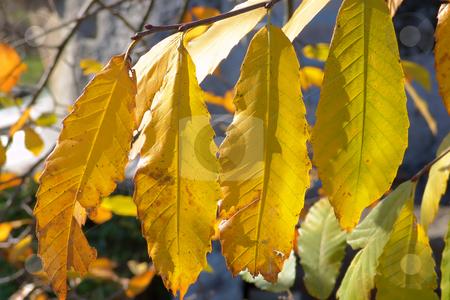 Leaves stock photo, Autumn tree by Rui Vale de Sousa