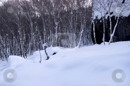 Forest stock photo, Snow at the forest in winter time by Rui Vale de Sousa