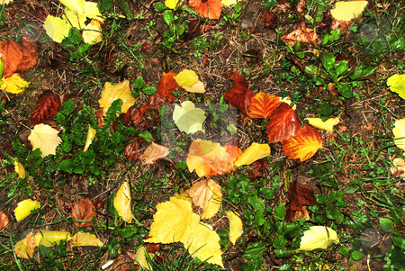 Autumn wet leaves background stock photo, Yellow and red wet autumn leaves over green grass by Julija Sapic