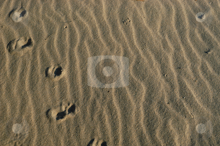 Sand stock photo, Desert sand detail by Rui Vale de Sousa