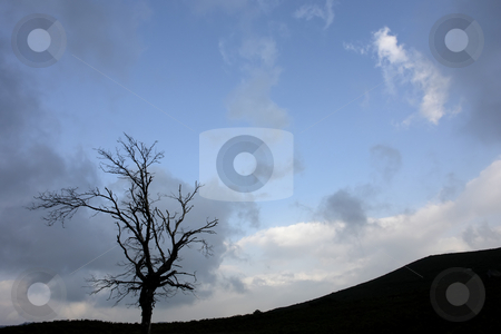 Tree stock photo, Tree on the top of the mountain by Rui Vale de Sousa