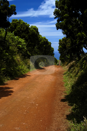 Road stock photo, Red road on the country in azores islands by Rui Vale de Sousa