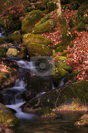 Running stock photo, Autumn river detail in the portuguese national park by Rui Vale de Sousa