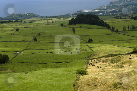 Fields stock photo, Azores farms and fields by Rui Vale de Sousa