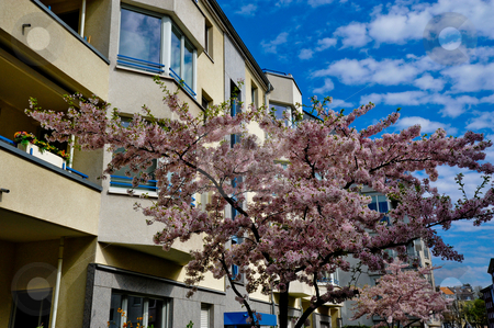 Tree and building stock photo, Blossoming tree in front of apartment building and sky background by Jaime Pharr