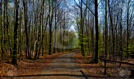 Path stock photo, Path through the trees by Jaime Pharr