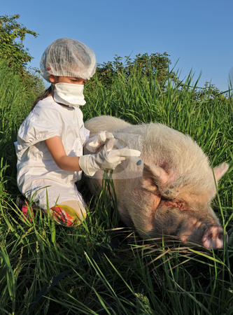 Swine Influenza Flu stock photo, Child playing with a pig and risk th swine influenza flu by Bonzami Emmanuelle