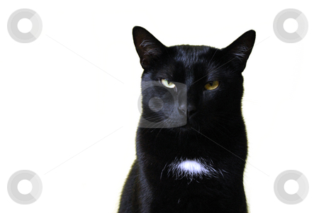 Black Cat stock photo, Close up head shot of green-eyed black cat. by Tudor Antonel adrian
