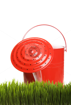 Grass care stock photo, Red watering can in long grass on a white background by Steve Mcsweeny