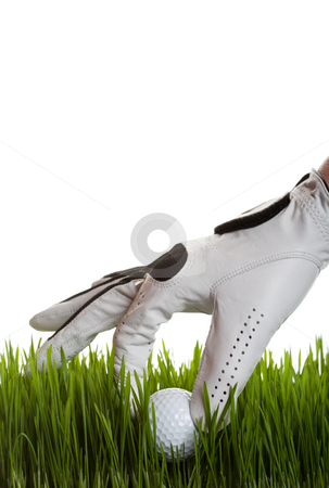Golf ball retrieval stock photo, A golfer retrieves a golf ball from the long grass on white by Steve Mcsweeny