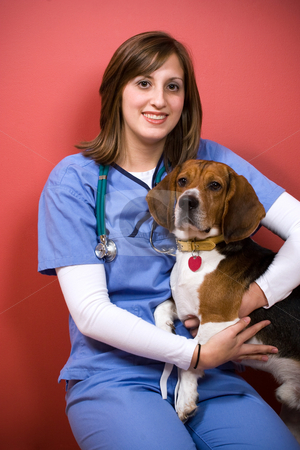 Veterinarian With a Beagle stock photo, A veterinarian posing with a purebred beagle dog. by Todd Arena