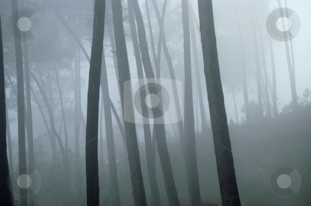 Fog stock photo, Fog at the forest in the portuguese national park by Rui Vale de Sousa