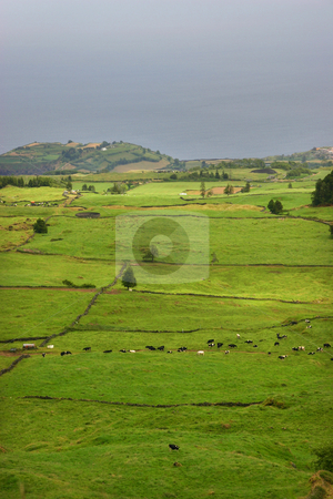 Fields stock photo, Azores coast fields by Rui Vale de Sousa
